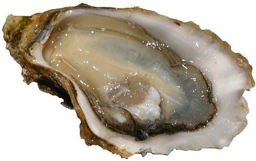 Hàu biển OB được chiết xuất từ 100% hàu biển tự nhiên