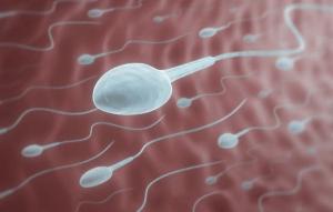 Sự thật về tinh trùng